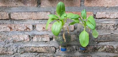 agricultura urbana, verduras en la botella de plástico reciclado foto