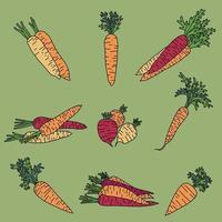 Doodle freehand sketch drawing of carrot vegetable collection. vector