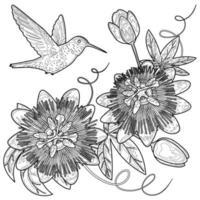 Hummingbird and Passiflora Coloring Page vector