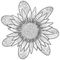 Protea Coloring Page vector