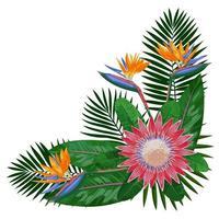 Tropical Bouquet Corne rComposition vector