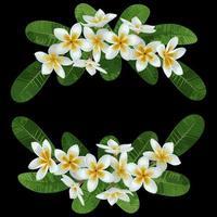 Plumeria Tropical Bouquet vector