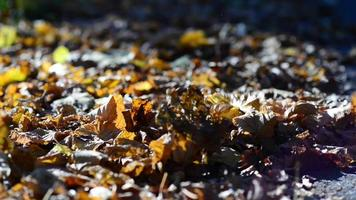 hojas de otoño en el suelo video