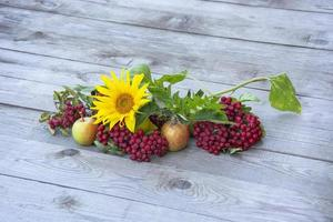 Sunflower flower next to red rowan and ripe apples photo