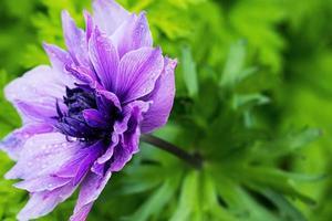foto de primer plano de hermosas flores