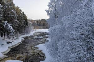 Frosty birches and a river in January in Northern Sweden. photo