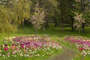arreglos florales en un parque público en gotemburgo, suecia. foto