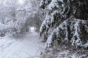 Snowmobile path through a snowy forest. photo