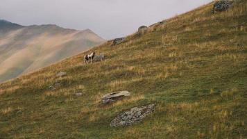caballo en la montaña foto