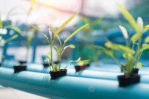 Vegetables Hydroponics farming in farmland background photo
