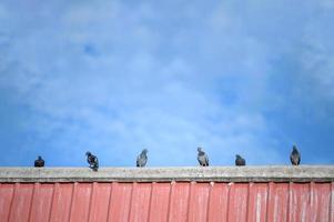 bandada de palomas en la azotea. concepto de animales y aves foto