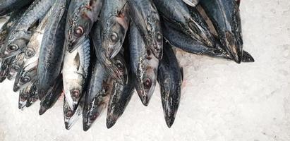 Mackerel on ice in the supermarket. Dead raw frozen Japanese fish photo