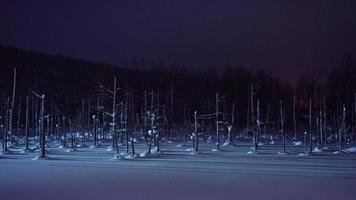 Branche d'arbres avec de la neige en hiver à l'étang bleu de Biei à Hokkaido video