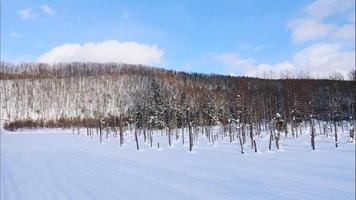 Branch Tree with Snow in Winter Season at Biei Blue Pond in Hokkaido video