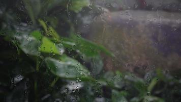 raindrops on the glass window panes show the rain falling video
