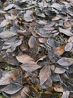 Las hojas de otoño están cubiertas de escarcha en un día helado en un parque de la ciudad foto