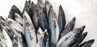 caballa sobre hielo en el supermercado. Pescado japonés congelado crudo muerto foto