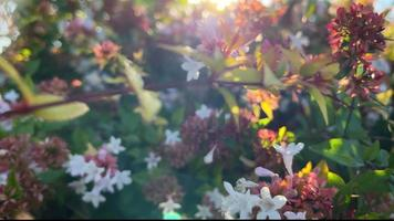 Colorful Autumn Flowers and Leaves video
