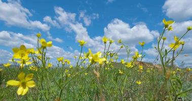 colorful flowers in the spring field video