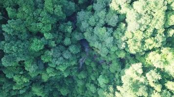Aerial top view of forests of Sochi, Russia video