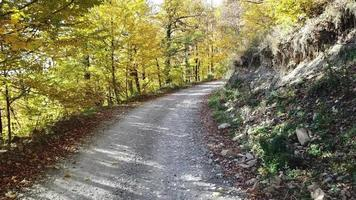 Forest road of the Caucasus in autumn, Russia. video