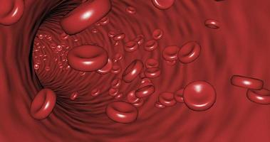 Movement inside a blood vessel among platelets Red blood cells video