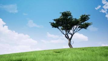 ensamt träd i fält realistiska bilder video