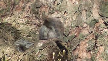 pequeña ardilla en el bosque video