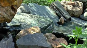 stenar i en bäck rinnande vatten bakom huset video