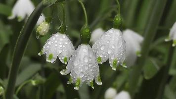 Beautiful white flowers in the garden video