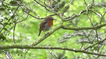 A bird perched on a branch in the forest video