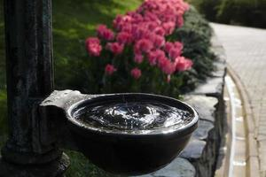 Water dripping into a bowl of water and blurry pink tulips photo