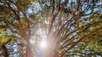 el sol brillando a través de los árboles foto
