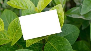 White business card on natural green leaves for mockup photo