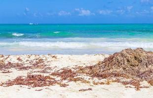 Red seaweed on the tropical beach Punta Esmeralda, Playa del Carmen, Mexico photo