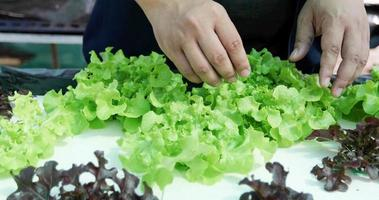 Vegetables on a vegetable farm photo