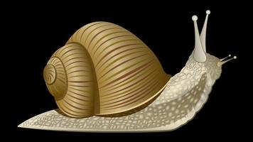 Snail realistic isolated vector