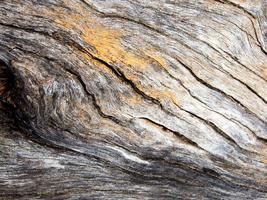 Textura de la superficie de madera de tocón viejo foto