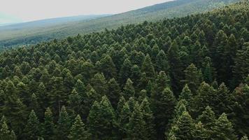 veduta aerea della foresta video