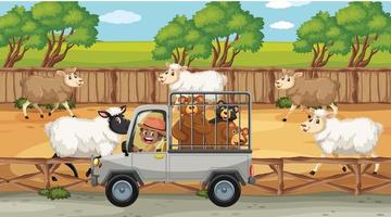 Safari scenes with many sheeps and kids cartoon character vector