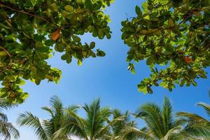 Bottom view to tropical palm trees leaf photo