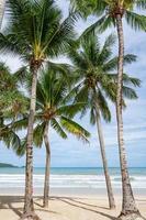 palmeras alrededor de la playa de patong phuket foto