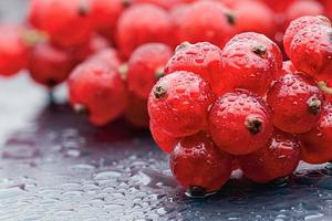 Red currant berries with water drops on the dark grey background. Macro photo. photo