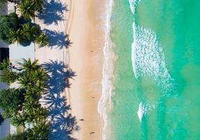 Aerial view top down of Coconut palm trees photo