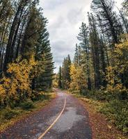 Curved asphalt road in pine forest on autumn photo