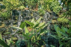 Scenery of waterfall flowing in green garden photo