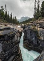 Traveler standing on Mistaya Canyon with pine forest at Icefields Parkway photo