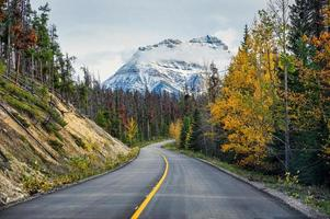 Scenic road trip with rocky mountain in autumn pine forest at Icefields Parkway photo