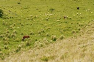 paisaje de tres caballos pastando en el valle de la montaña foto