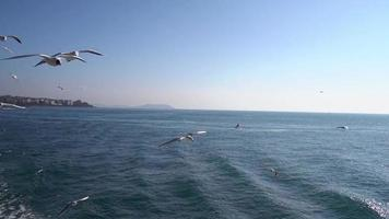 Seagulls in Slow Motion at Istanbul from A Ship video